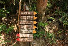"Photo of ""الخريطة مهمة"".. مدحت سعيد يروي تجربة سفره إلى غابات ماليزيا"