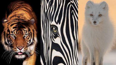 Photo of من أجل البقاء.. أغرب 3 وسائل دفاعية تمتلكها الحيوانات البرية