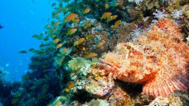 Photo of إياك أن تلمسها.. السمكة الصخرية تقضي على فريستها في أقل من ساعة