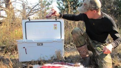 Photo of إرشادات هامة لتجنب عدوى الأوبئة من الحيوانات والطيور خلال الصيد البري
