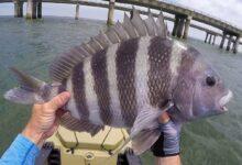 Photo of دليلك لمعرفة أفضل طريقة وأنسب وقت لصيد التيوس