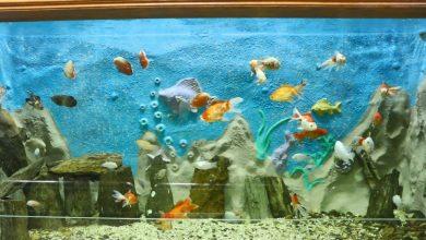 Photo of 4 نصائح مهمة.. كيفية اختيار أسماك الزينة قبل شرائها؟
